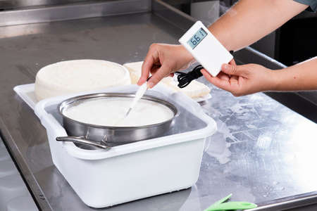 Cheesemaker measures the temperature of milk in a steel container with an electronic thermometer