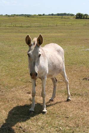 a donkey on a farm