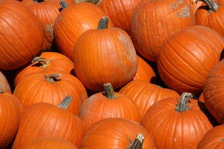 jack o latern: A harvest of pumpkins before .
