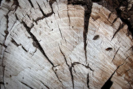 A slice of old fire wood Imagens