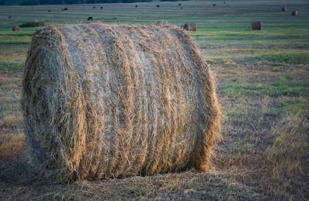 A round bale of hay up close in a rural pasture.