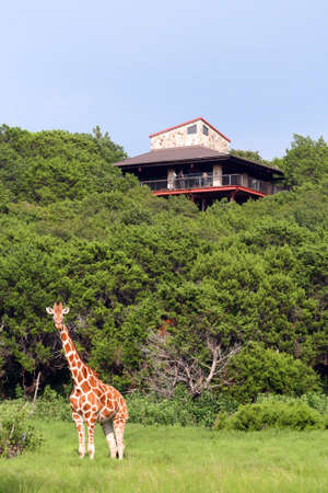 An overlook watching the giraffes.  Great color and detail.  Will make awesome prints. Editorial