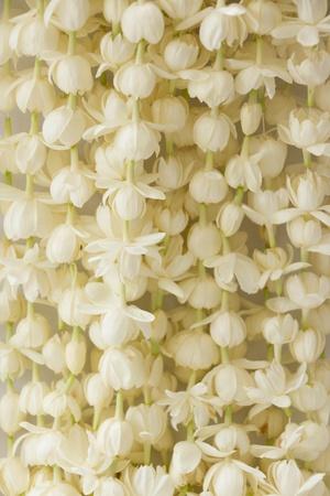jasmine flower: A lot of jasmine flower