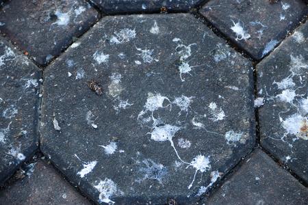 Bird feces on bricks