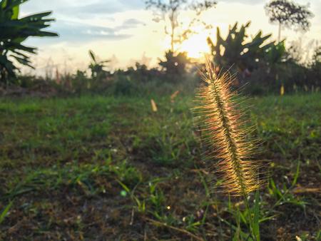 Grass and sunset 写真素材