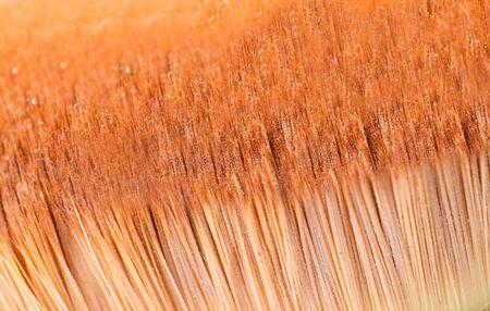 Macro pictures of brown bristlesselective focus