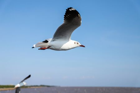 The seagull fly in the blue sky.