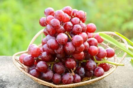 赤の種なしブドウ