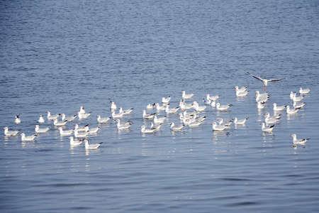 migrate: Migrate seagulls
