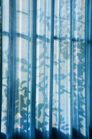 window shades: Window shades and shadows cast by leaves