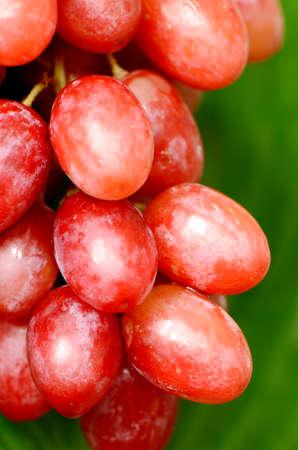 seedless: Seedless grape