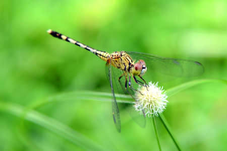 A dragonfly on grass