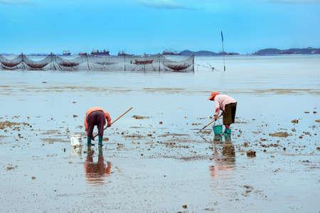 livelihoods: Finding shells in the sand  The livelihoods of coastal residents