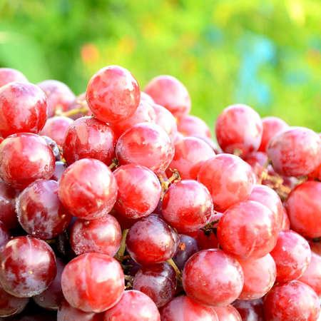 seedless: Seedless purple grape  Stock Photo
