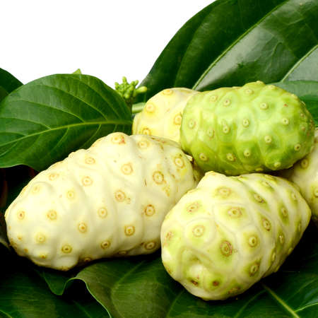 Fresh green leaf and fresh fruit of herbal food called Indian Mulberry or Noni  Morinda citrifolia  L