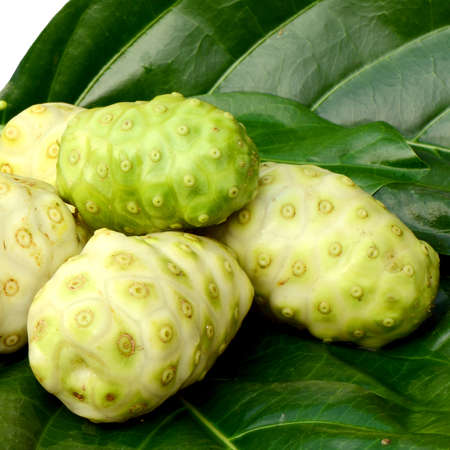 l nutrient: Fresh green leaf and fresh fruit of herbal food called Indian Mulberry or Noni  Morinda citrifolia  L