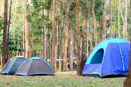 Camping tent underneath big trees in national park