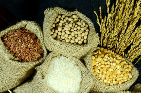 Organic products of soy bean, corn, coarse rice and white rice in burlap sac on dark background  Stock Photo - 27727335