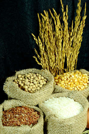 burlap sac: Organic products of soy bean, corn, coarse rice and white rice in burlap sac on dark background