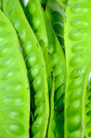 stinking: Big pod of stinking beans  Parkia Speciosa   Stock Photo