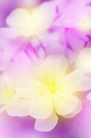 Closed-up of Flowers with Soft Focus Color Filtered as Background