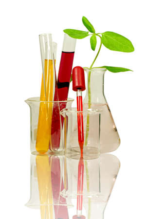 Set of laboratory equipment with chemical solutions and young plant with reflection isolated on white background with clipping path  photo