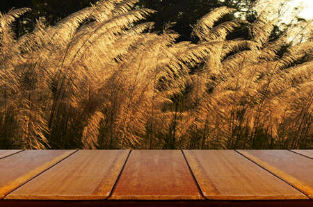 picknick: Outdoor Picnic Background with Wooden Table in the Evening Light. Stock Photo