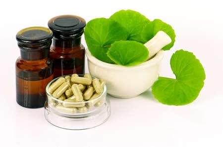 Indian pennywort (Centella asiatica (L.) Urban.) brain tonic herbal plant.