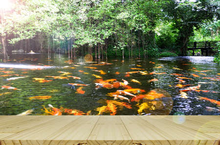 koi fish pond: Perspective wood view with Backyard Koi fish pond background.