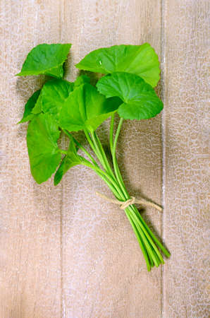 herbal: Indian pennywort (Centella asiatica (L.) Urban.) brain tonic herbal plant.