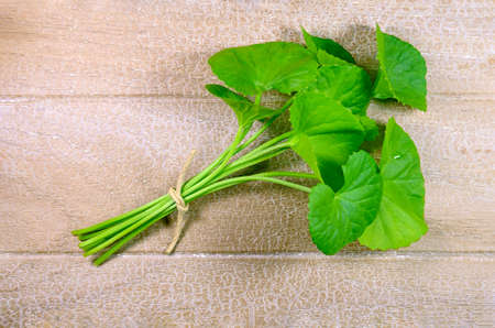 brain aging: Indian pennywort (Centella asiatica (L.) Urban.) brain tonic herbal plant.