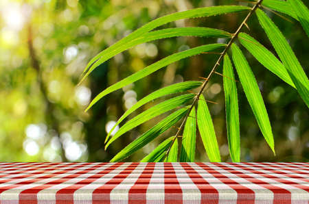 picknick: Outdoor picnic background in summer sun light. Stock Photo