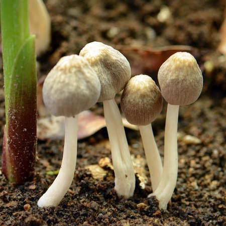 moist: Little mushroon found on moist land in rainny season.