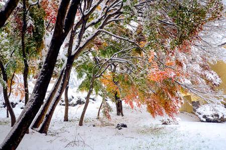 kawaguchi ko: Autumn leaves and first snow in 2016 at Kawaguchi-ko, Japan. Stock Photo