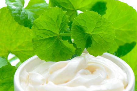 longevity: Indian pennywort (Centella asiatica (L.) Urban.) anti-aging skin care product. Stock Photo
