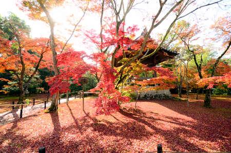 Autumn garden at Kinkakuji temple Kyoto, Japan. Editorial