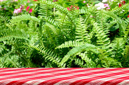 fishbone: Picnic table with green garden background of Fishbone Fern or Sword Fern (Nephrolepis cordifolia (L.) Presl.)
