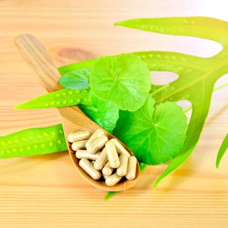 Gotu Kola, Indian pennywort (Centella asiatica (L.) Urban.) fresh leaves and dried powder in hard gelatin capsules.
