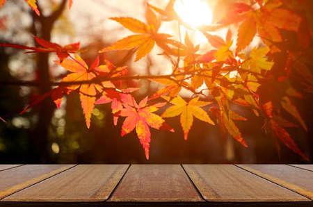 Perspective wood counter with Japanese maple tree garden in autumn. Standard-Bild