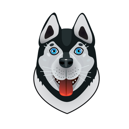 helper: Dog friend and helper in our life. Dog Husky blue expressive eyes and blue, frost-resistant and hardy working in teams.