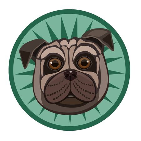 snout: Funny Pug dog eyes fast big hair smooth flattened snout, a pretty sight Illustration