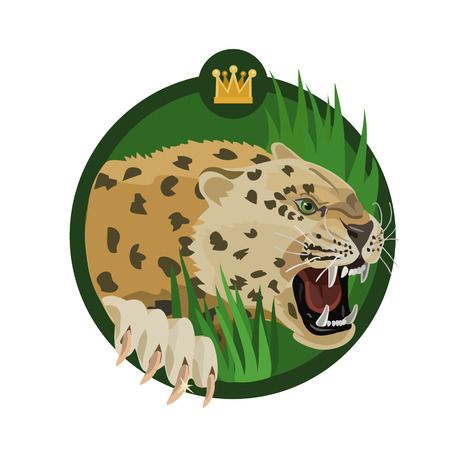 King leopard roars in the jungle, showing that he is the master of his territory, and he protects her.