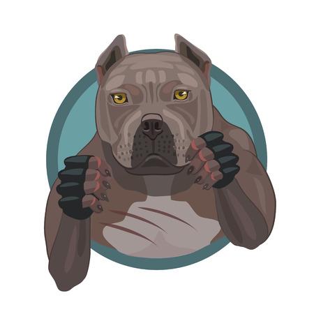 kampfhund: Kampfhund pit bull bereit und Verteidigung in der Kampfarena Spiele Faustkampf angreifen Illustration