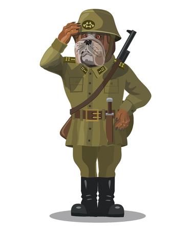 Soldado perro bulldog, un buen soldado, no les gusta que los empujen, agarrar sus dientes es mortalmente bueno en la tarea Foto de archivo - 79749681