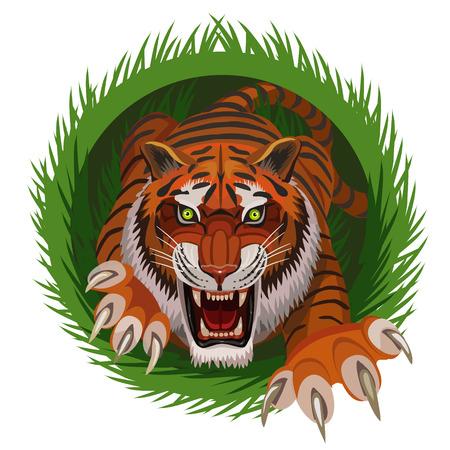 Tiger hunter climbs