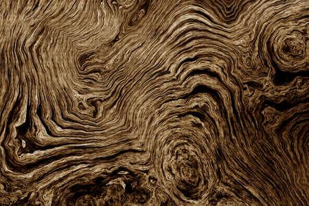Struttura di radici di albero con linee ondulate e anelli di età. Sfondo astratto. Archivio Fotografico - 82271353
