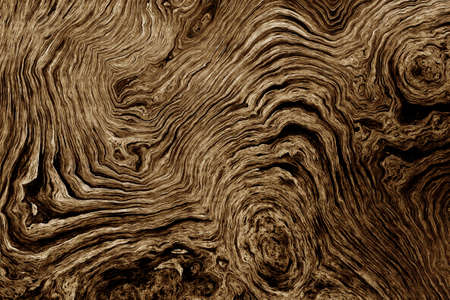 labyrinthine: Texture of roots of tree with wavy lines and age rings. Abstract background.