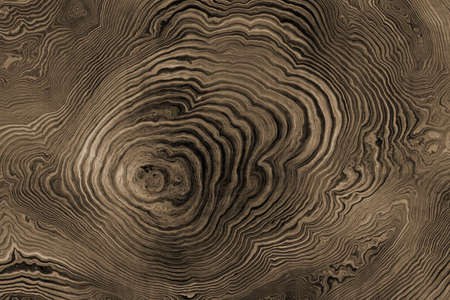 Texture of roots of tree with wavy lines and age rings. Abstract background.