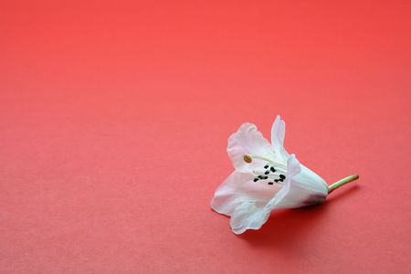 One white flower on red, symbolizes individuality or loneliness