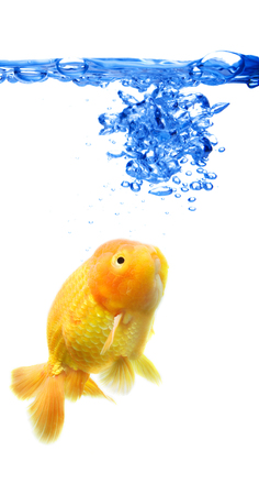 fishtank: A shot of a goldfish in a fish tank with abstract blue bubbles